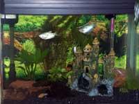 Tamara's Aquarium