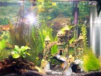 Tamara's Fish Tank