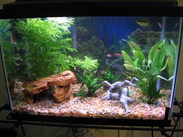 Tropical fish tanks page 22 for Freshwater fish tank setup