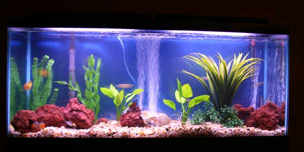 Tropical fish tanks page 6 for Freshwater fish tank