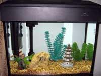 Zubair's Fish Tank