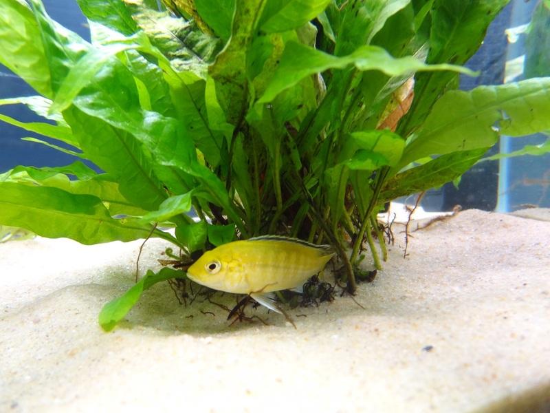 Freshwater fish diet - That Crazy Fish Man Member Member