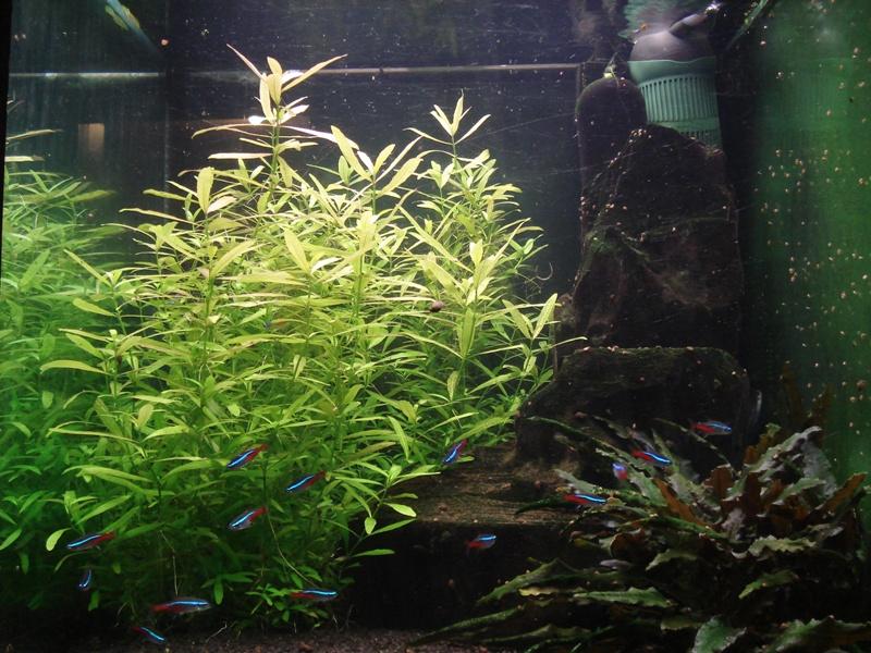 17.01.15 Neon Tetra Cube Aquarium Steve Joul - Copy.JPG