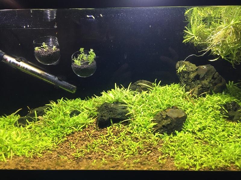 View Images Magic seeds? aquarium aquascaping 263169
