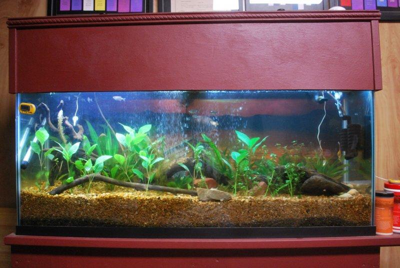 55 Gallon Aquarium 8-15-20.jpg