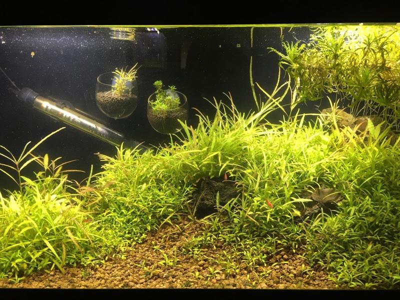 Aquarium aquascape hair grass hg medium seed bibit daftar harga. View Images Magic seeds? aquarium aquascaping 263169