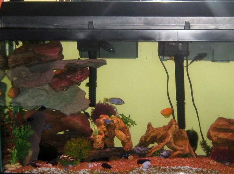 Freshwater aquarium fish high ph - Aquarium4 Jpg