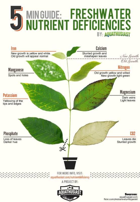 Freshwater-Plant-Nutrient-Deficiency.jpg