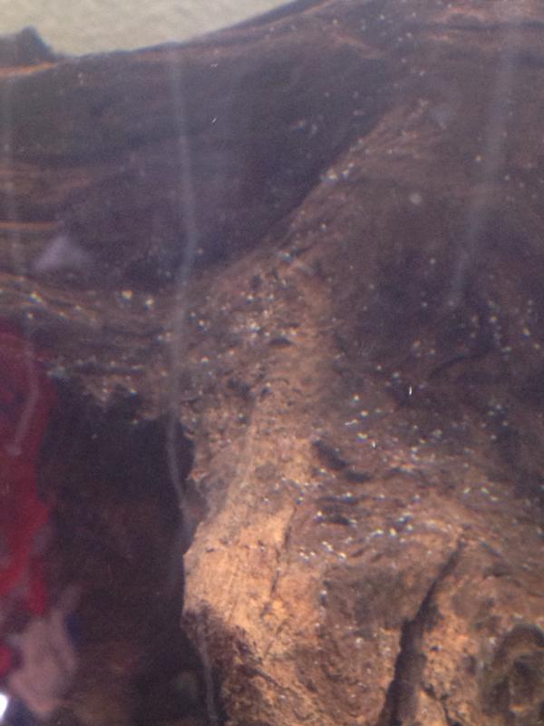 Fish aquarium white spots -  Imageuploadedbyfish Lore Aquarium Fish Forum1398960720 904071 Jpg
