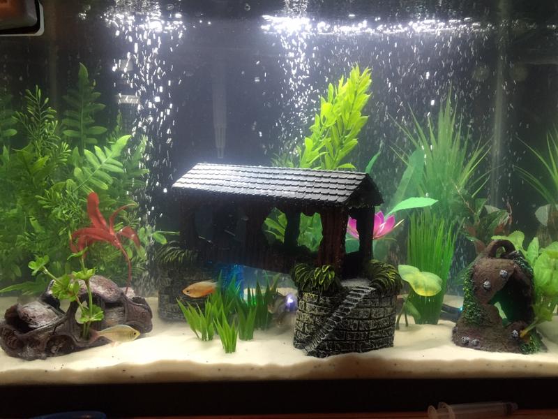 Fish in new aquarium - Imageuploadedbyfish Lore Aquarium Fish Forum1425161835 828630 Jpg