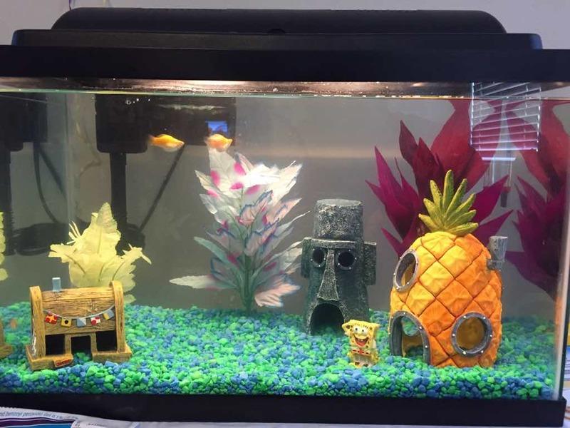 Fish in new aquarium - Imageuploadedbyfish Lore Aquarium Fish Forum1439615525 855831 Jpg