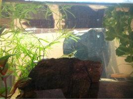 ImageUploadedByFish Lore Aquarium Fish Forum1402267913.011254.jpg