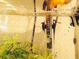 ImageUploadedByFish Lore Aquarium Fish Forum1403452702.329902.jpg