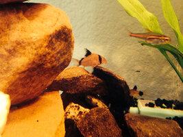 ImageUploadedByFish Lore Aquarium Fish Forum1403452901.269750.jpg