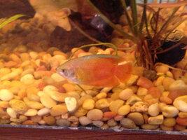 ImageUploadedByFish Lore Aquarium Fish Forum1403490775.304573.jpg