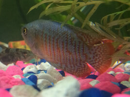 ImageUploadedByFish Lore Aquarium Fish Forum1403614297.470778.jpg