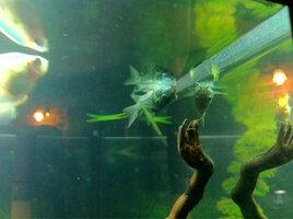 ImageUploadedByFish Lore Aquarium Fish Forum1412866090.007674.jpg