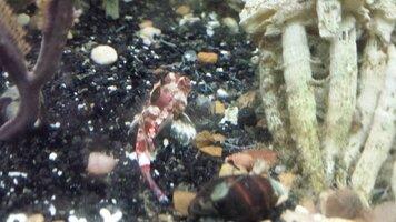 seahorse.nov.14.2.lawnmower.jpg