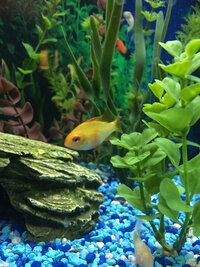 ImageUploadedByFish Lore Aquarium Fish Forum1416027049.095759.jpg