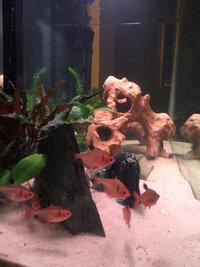 ImageUploadedByFish Lore Aquarium Fish Forum1422753009.860894.jpg
