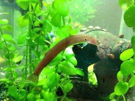 ImageUploadedByFish Lore Aquarium Fish Forum1424847565.739772.jpg