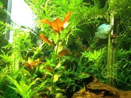 ImageUploadedByFish Lore Aquarium Fish Forum1425918085.439041.jpg