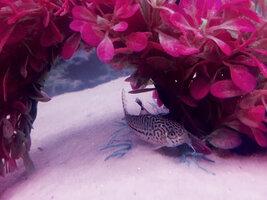 ImageUploadedByFish Lore Aquarium Fish Forum1426015360.161707.jpg