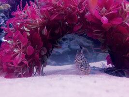 ImageUploadedByFish Lore Aquarium Fish Forum1426015405.571929.jpg