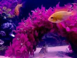 ImageUploadedByFish Lore Aquarium Fish Forum1426015418.226559.jpg