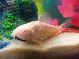 ImageUploadedByFish Lore Aquarium Fish Forum1426016428.292525.jpg