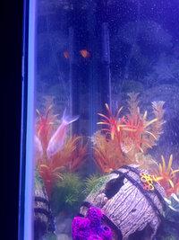 ImageUploadedByFish Lore Aquarium Fish Forum1426105096.620035.jpg