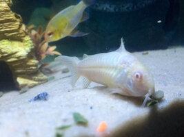 ImageUploadedByFish Lore Aquarium Fish Forum1426471273.155788.jpg