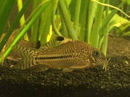 ImageUploadedByFish Lore Aquarium Fish Forum1434944746.962214.jpg