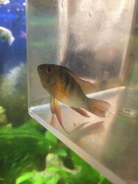 ImageUploadedByFish Lore Aquarium Fish Forum1437851202.891351.jpg