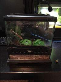 ImageUploadedByFish Lore Aquarium Fish Forum1438023804.395957.jpg