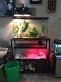 ImageUploadedByFish Lore Aquarium Fish Forum1438023890.619007.jpg