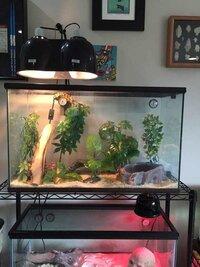 ImageUploadedByFish Lore Aquarium Fish Forum1438024022.202066.jpg