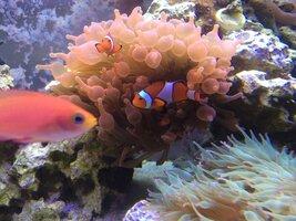 ImageUploadedByFish Lore Aquarium Fish Forum1438544385.427174.jpg