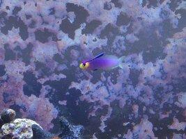 ImageUploadedByFish Lore Aquarium Fish Forum1438544643.695390.jpg