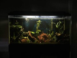 ImageUploadedByFish Lore Aquarium Fish Forum1438735232.601280.jpg