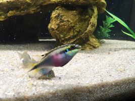 ImageUploadedByFish Lore Aquarium Fish Forum1439087924.918491.jpg