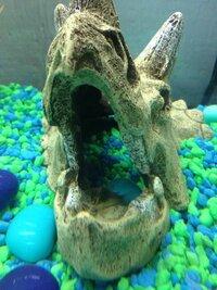ImageUploadedByFish Lore Aquarium Fish Forum1441484792.977460.jpg