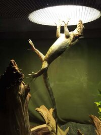 ImageUploadedByFish Lore Aquarium Fish Forum1445794496.943121.jpg