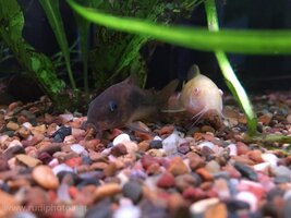 ImageUploadedByFish Lore Aquarium Fish Forum1448255848.256739.jpg