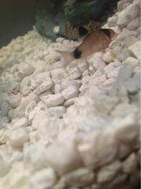 ImageUploadedByFish Lore Aquarium Fish Forum1448510290.449823.jpg