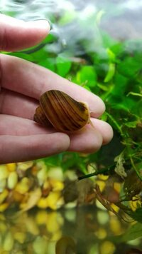 182982d1450169657-snail-picture-id-dictionary-1450169660460.jpg