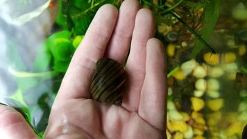 182987d1450169764-snail-picture-id-dictionary-1450169766761.jpg