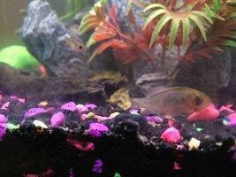ImageUploadedByFish Lore Aquarium Fish Forum1450210243.474617.jpg