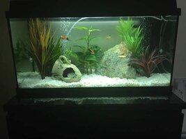 ImageUploadedByFish Lore Aquarium Fish Forum1453210346.679646.jpg