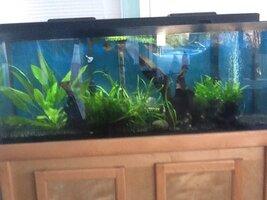 ImageUploadedByFish Lore Aquarium Fish Forum1453211387.735431.jpg